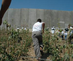 Palestinian children and Israeli wall